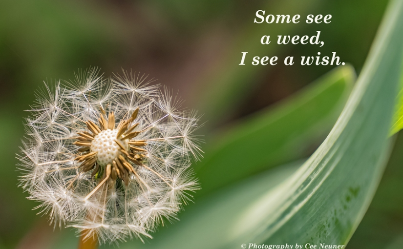 Some see a weed …