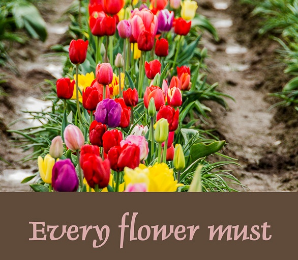 Every flower …